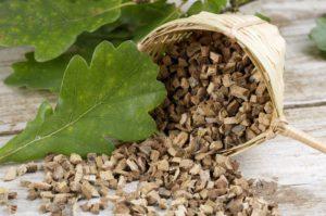 Кора дуба - безопасное народное средство от грибка