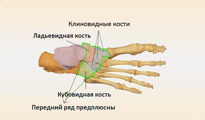 Суставы стопы: анатомия, заболевания и лечение