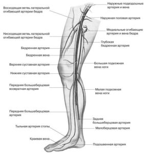 Схема сосудов ног