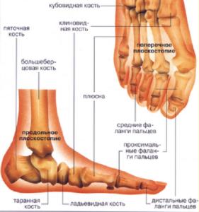 Кости стопы при разных видах плоскостопия