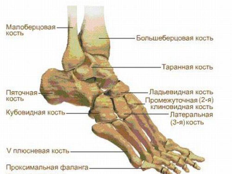 Боль суставов в пятках при сгибе нестероидные противовоспалительные препараты список для суставов
