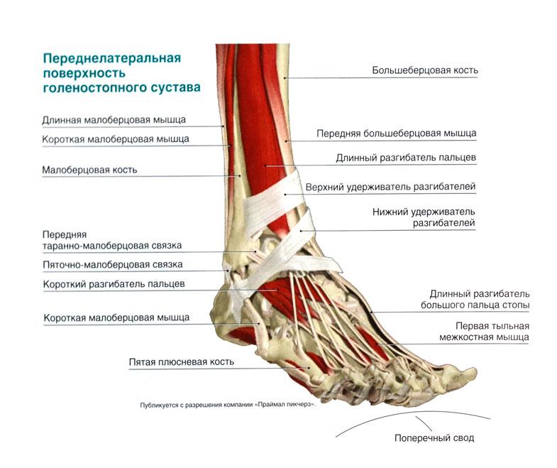 Комплекс специальных упражнений при переломе голеностопного сустава воспаление суставов.лечение профилактика