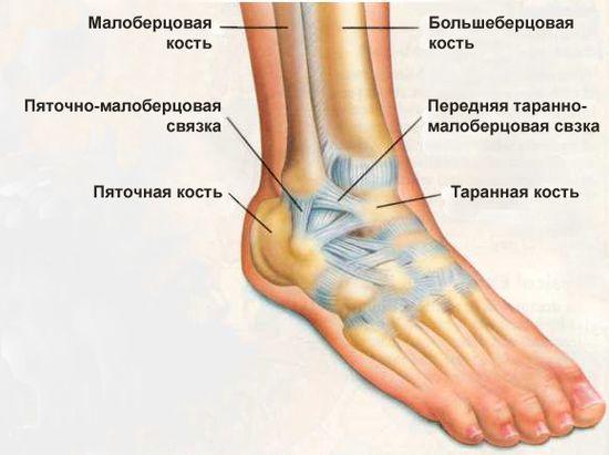 Отточный массаж голеностопного сустава растяжение связок коленного сустава гемартроз