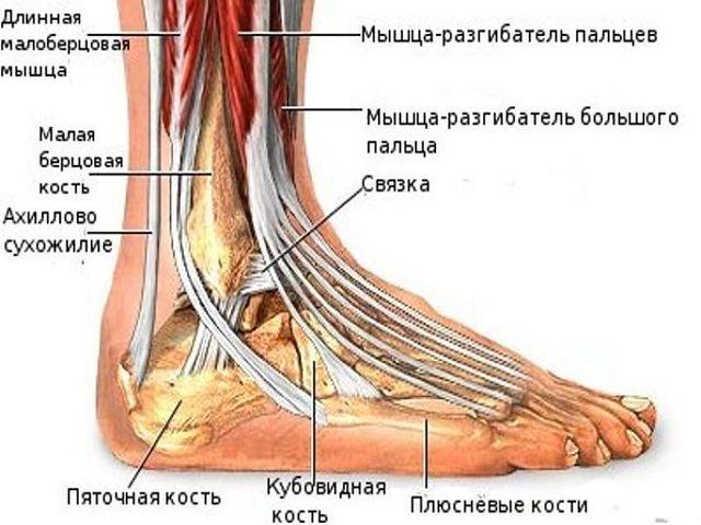 Переломы голеностопного сустава человека лекарственные средства при артрите суставов