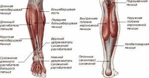 Берцовый нерв симптомы лечение