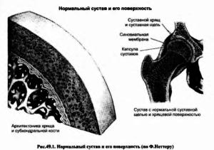 Нормальный сустав и его поверхность