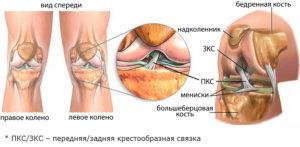Передняя и задняя крестообразная связка