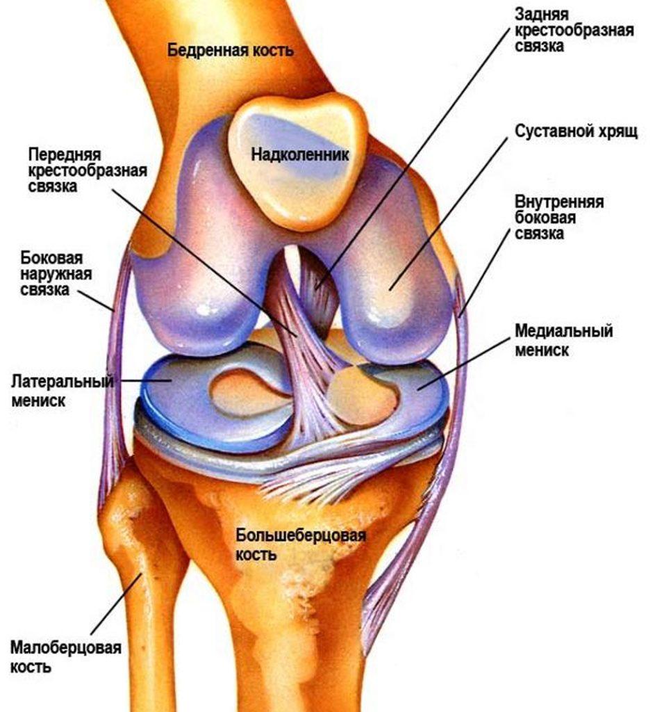 Диагностика повреждения мениска коленного сустава эндопротезирование тазобедренного сустава в курске