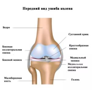 Изображение - Травма коленного сустава код по мкб 10 %D0%A1%D0%BA%D1%80%D0%B8%D0%BD%D1%88%D0%BE%D1%82-28-01-2018-215705-300x296