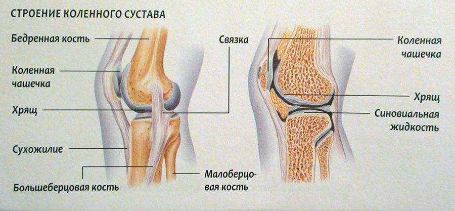 Блок коленного сустава что это такое ее стенки выделяют суставную жидкость которая снижает трение