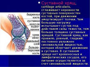 Суставной гиалиновый хрящ неравномерно истончен