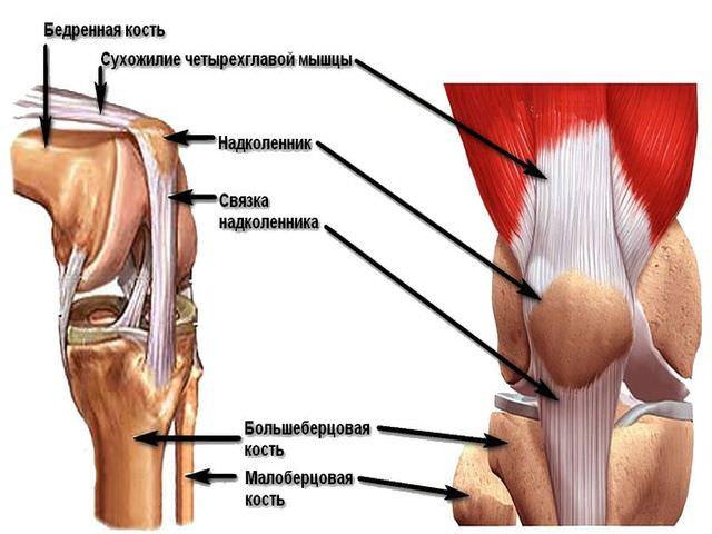 Как укрепить крестообразные связки колена