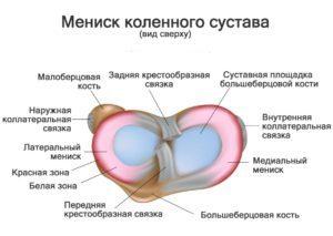 Изображение - Медиальный ретинакулум коленного сустава 01-stroenie-meniska-300x213-300x213