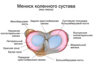 Изображение - Дискоидный мениск коленного сустава 01-stroenie-meniska-300x213