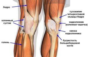 Изображение - Укрепление мышц коленного сустава e6324b9ad6d2c0f1f4f4ee0af6d39d8c-300x196
