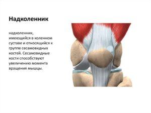 Изображение - Медиальный ретинакулум коленного сустава slide-32-300x225