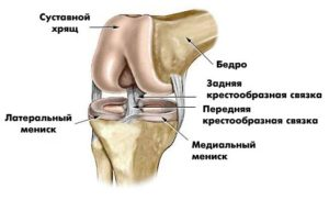 Сумки коленного сустава анатомия