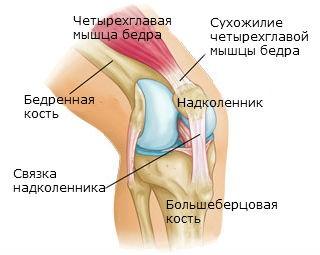 Вывих коленного сустава, привычный вывих: Как лечить