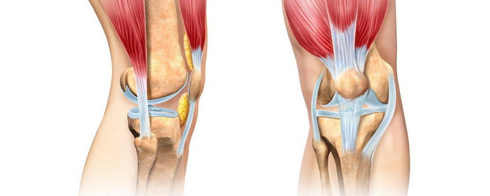 Связки укрепляющие коленный сустав. Связки коленного сустава. Коллатеральные связки коленного сустава. Внутрисуставные связки коленного сустава.