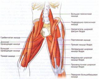 Изображение - Боль в мышцах тазобедренного сустава лечение myshtsy-bedra1-320x256