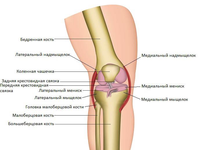 Сустав соединяющий бедренную берцовую кости хрустят и щелкают позвонки и суставы