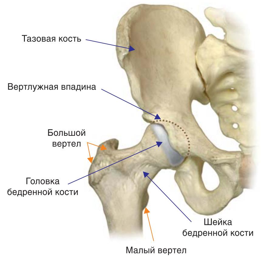 Головка сустава лечение компресс на суставы с глиной