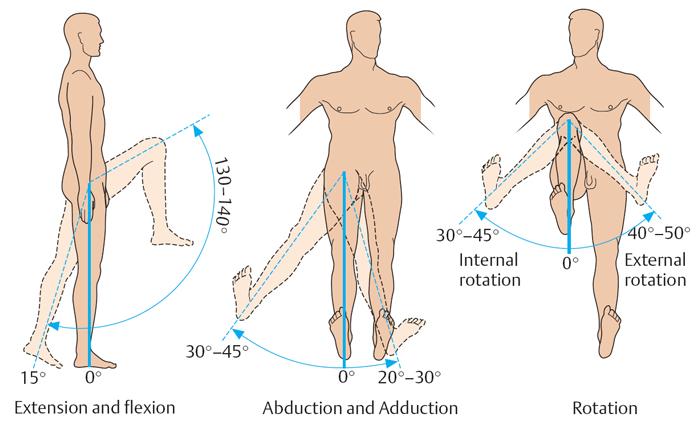Движения в тазобедренном суставе: сгибание, разгибание, отведение, приведение и ротация