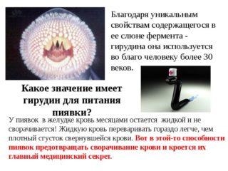 Изображение - Гирудотерапия при коксартрозе тазобедренного сустава polza-slyuny-piyavki-320x240
