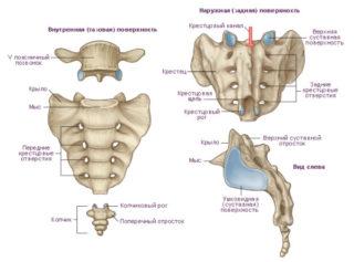 Перелом крестца последствия и лечение — Все про суставы