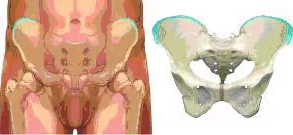 Где находится подвздошная кость