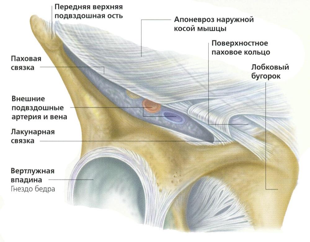 Разрыв паховых связок и мышц: симптомы и лечение
