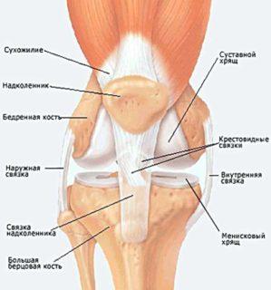 Почему болят колени при беге и после него{q}