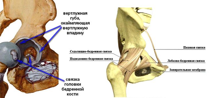 Периаротроз тазобедренного сустава лечени е ушиб сустава пальца на руке лечение
