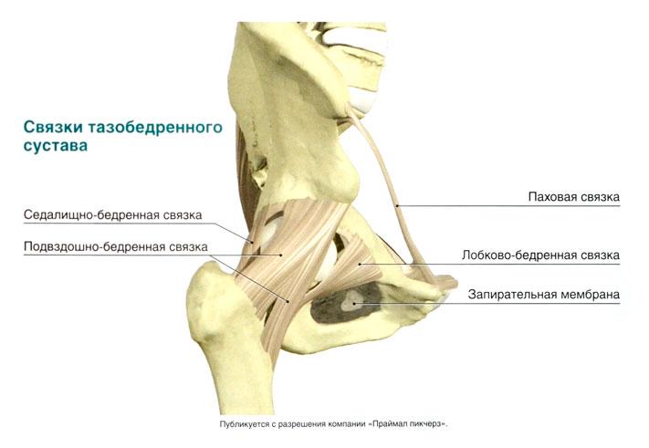 Разрыв сухожилия тазобедренного сустава плюснефаланговый сустав
