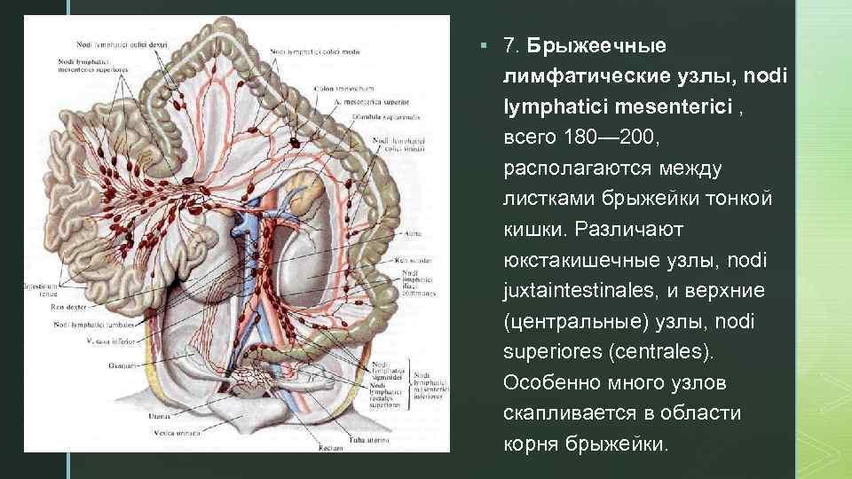 Лимфоузлы в кишечнике запутаные