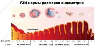 Можно ли делать узи печени и желчного пузыря во время месячных