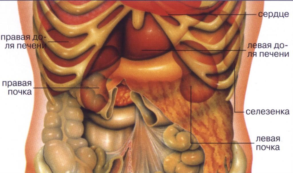можно сделать что находится под левым ребром фото кабачки кубиками