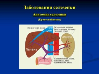 Заболевания селезенки