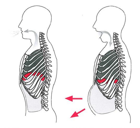 Как правильно дышать животом и грудной клеткой видео