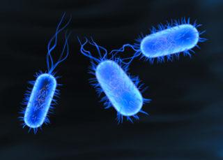 Бактерия Сальмонелла, проникая в организм вызывает понос и обезвоживание