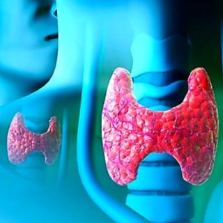 Нарушения в работе щитовидной железы приводят к проблемам с мочеиспусканием