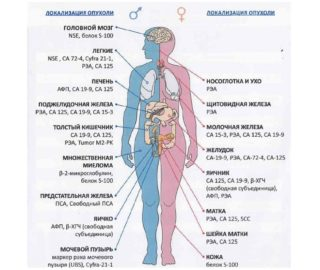 Причины ощущения комка в горле и в районе солнечного сплетения