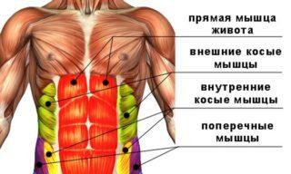 Органы брюшной полости у мужчин