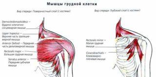 Какие мышцы качать в один день