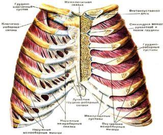 Артроз грудного отдела позвоночника симптомы и лечение