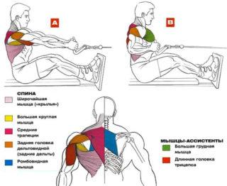 Техника выполнения тяги верхнего блока к грудной клетке в положении сидя