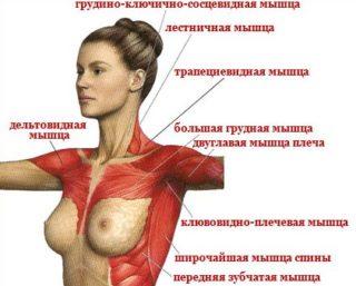 Эффективные упражнения для грудных мышц для девушек: особенности тренировок