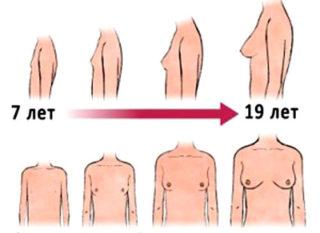 До скольки лет у девушек растет бюст