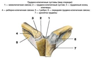 Грудино ключичный сустав анатомия. Артроз грудино ключичного сочленения. Стадии и симптомы заболевания