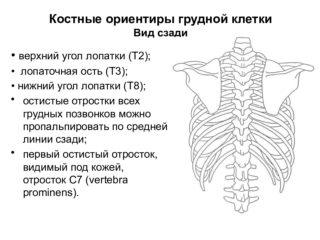 Форма грудной клетки в норме